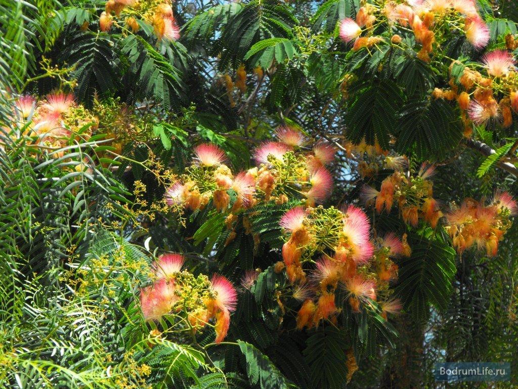 Картинки природа деревья цветущие